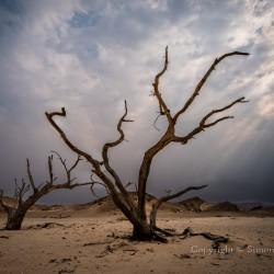 Dead trees, Hoanib River valley, Namibia